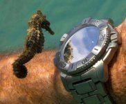 reloj caballito.jpg