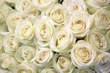 44464056-rosas-blancas-textura-y-fondo-floral-flores-de-cerca-boda-y-accesorio-de-la-boda-los-pé.jpg