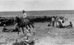 cattlefolk-roping.jpg