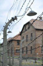 _DSC3312 [Post Auschwitz].JPG