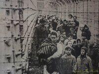 P5220219 [Post Auschwitz].JPG