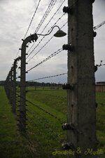 _DSC7615 [Post Auschwitz].JPG
